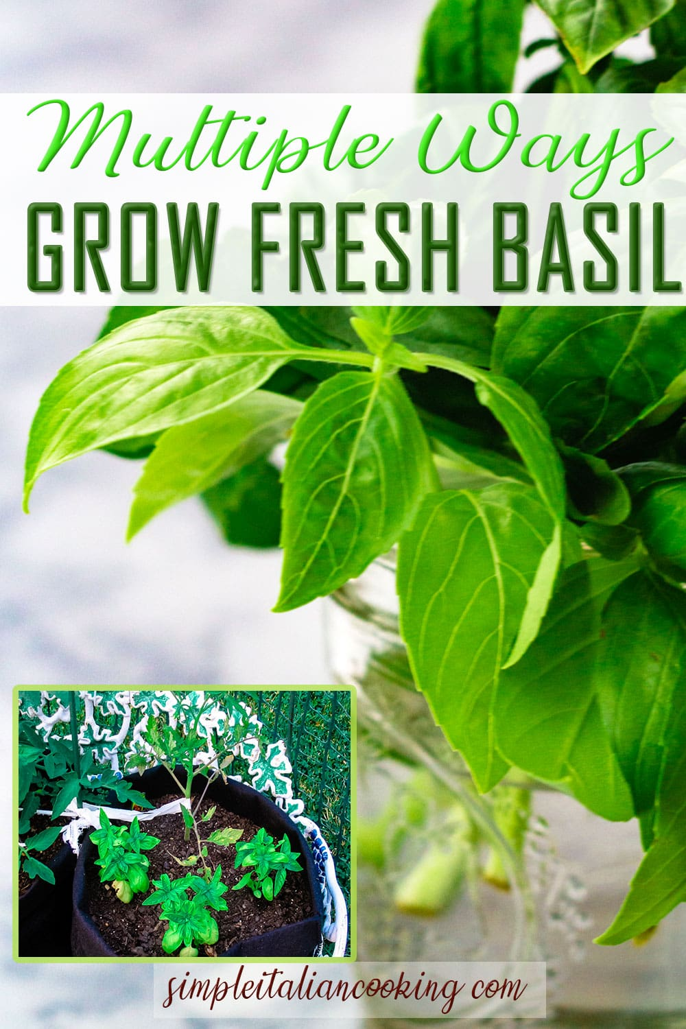 Multiple Ways for How to Grow Fresh Basil at Home